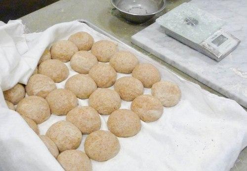 Infant seedy buns